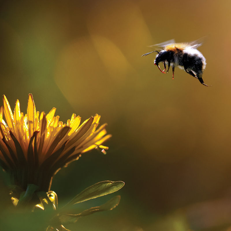 Cross-pollinate-800