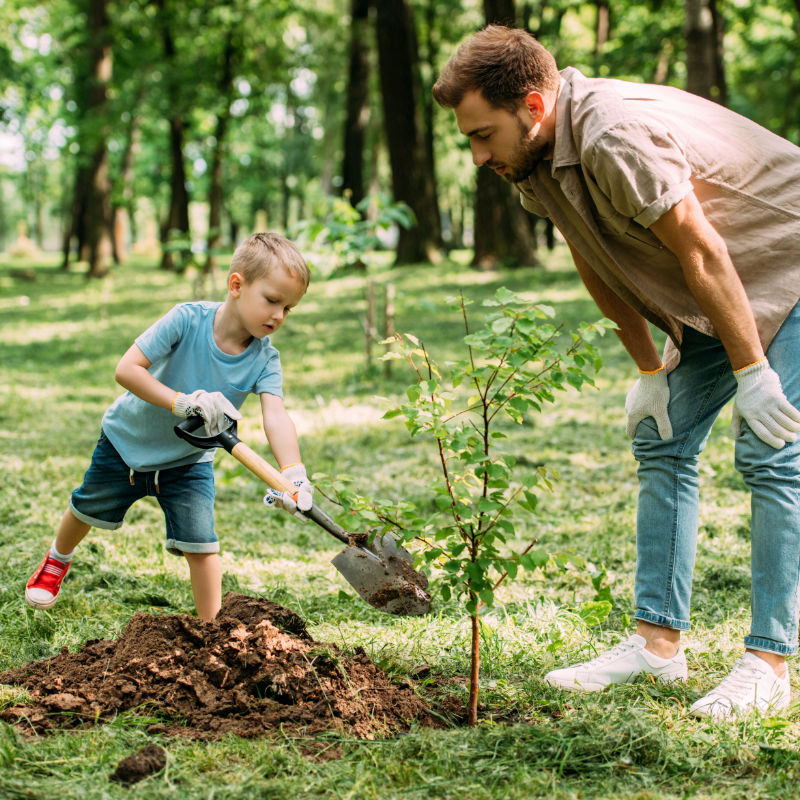 father looking how son planting tree at park